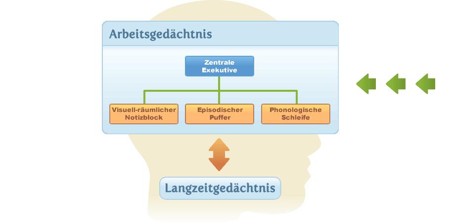 | Gehirnjogging, Gedächtnistraining & Gehirntraining im