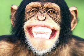 Monkeys love to laugh too