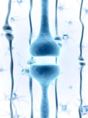 Kommunikation zwischen Darm und Gehirn