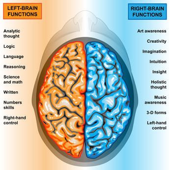 Recht und linke Gehirnhälfte übernehmen unterschiedliche Funktionen