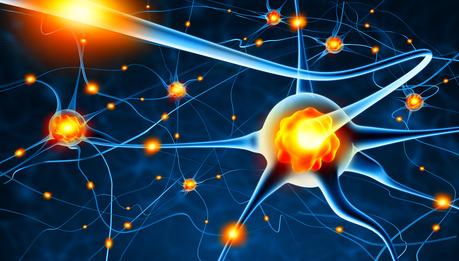 Die Nervenzellen in unserem Gehirn
