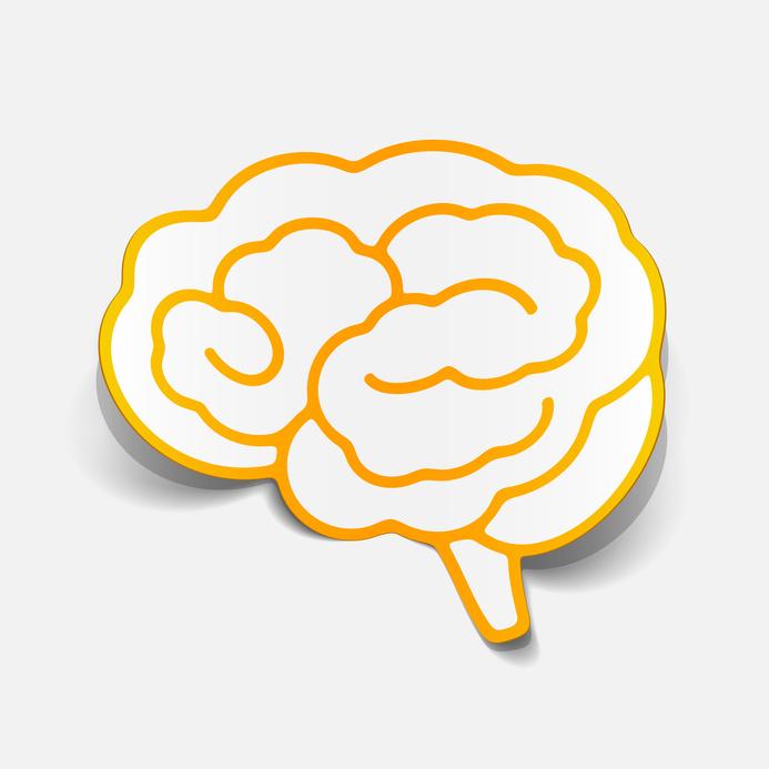Neuroplastizität des Gehirns