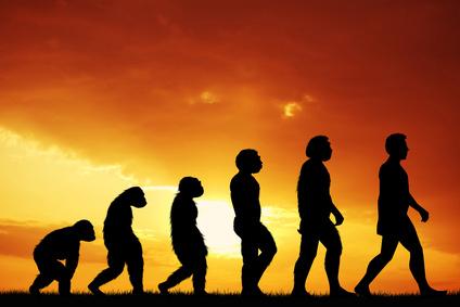 Die Evolutuon der Intelligenz