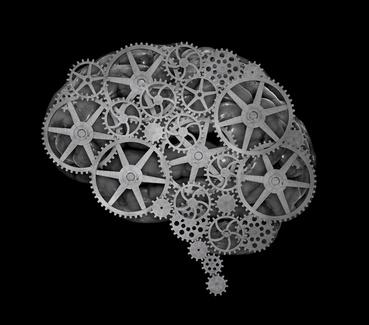 Gehirne wurden größer