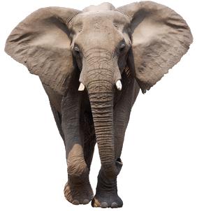 Elefanten sind intelligente Tiere