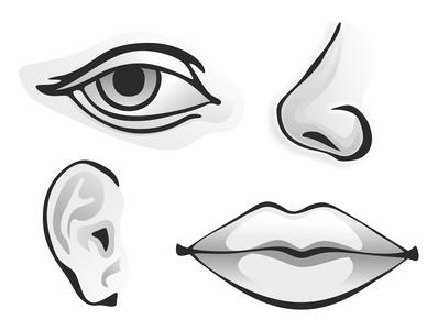 Gesichtswahrnehmung